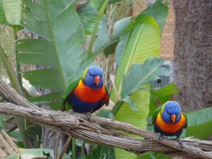 zoo hérault