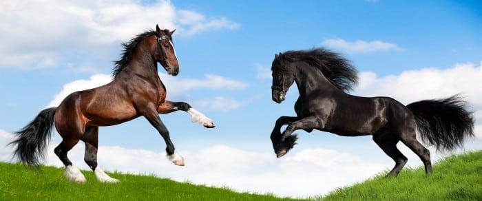 Spectacles avec chevaux dans l'Hérault